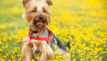 Caring for Your Dog - How to Choose Pet Food